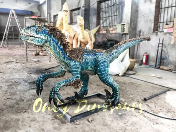Feathered Blue Animatronic Velociraptor Customized Dinosaur4