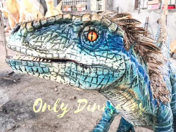 Feathered Blue Animatronic Velociraptor Customized Dinosaur6