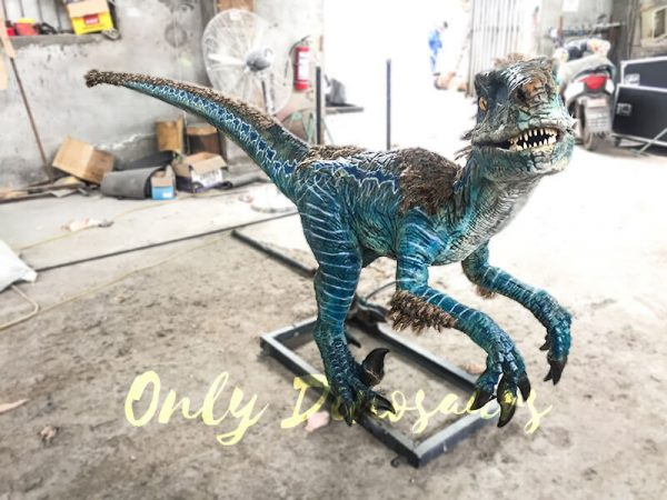 Feathered Blue Animatronic Velociraptor Customized Dinosaur1