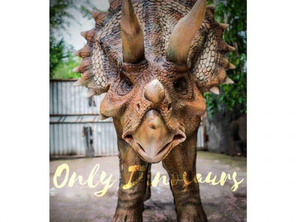 Four Legged Dinosaur Costume Triceratops Suit4