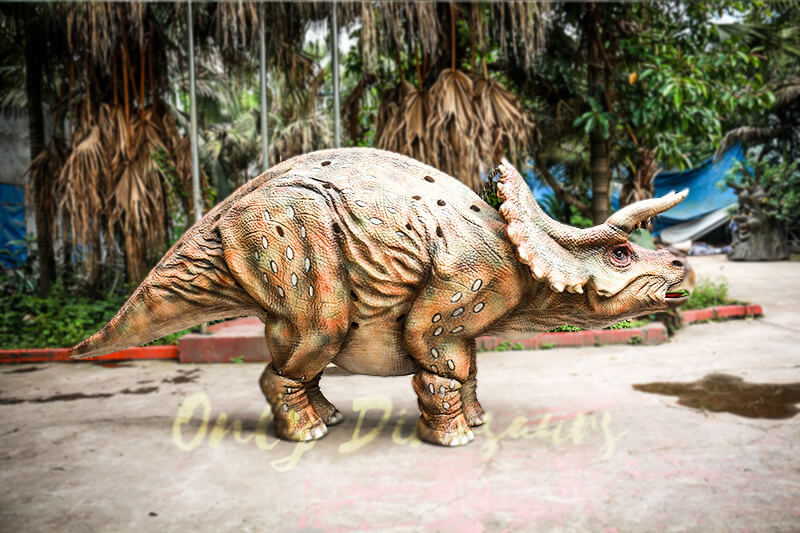 Huge Triceratops Dinosaurs Costume for Stage Show1 1