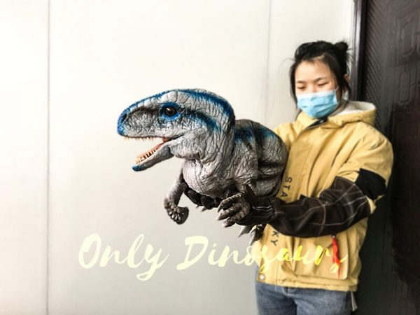 Lifelike-Baby-Velociraptor-Puppet-with-Gloved-Hand4-1