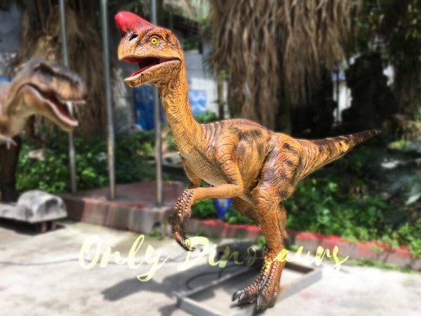Museum-Dinosaur-Figure-Animatronic-Oviraptor1-2