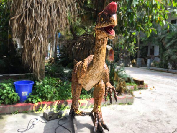 Museum-Dinosaur-Figure-Animatronic-Oviraptor2-2