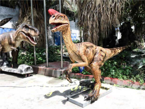 Museum Dinosaur Figure Animatronic Oviraptor3 1