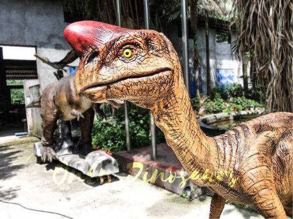 Museum Dinosaur Figure Animatronic Oviraptor4 1