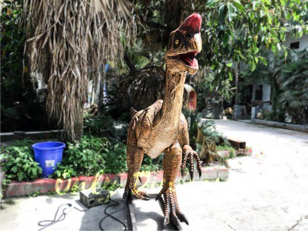Museum Dinosaur Figure Animatronic Oviraptor6 1