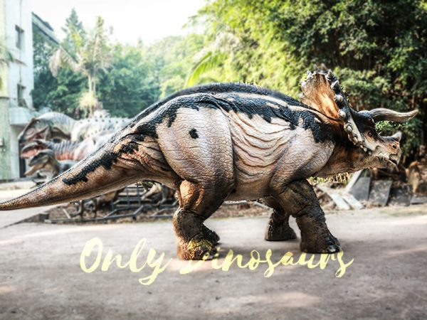 Realistic Four Legged Triceratops Costume for Two Actors1 1