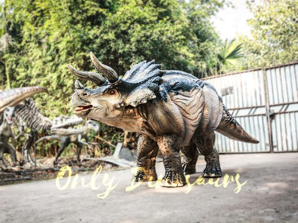 Realistic Four Legged Triceratops Costume for Two Actors3 1