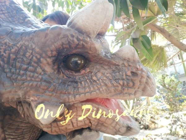 Realistic-Triceratops-Baby-Puppet-Of-Jurassic-World-Dark-Brown1-2