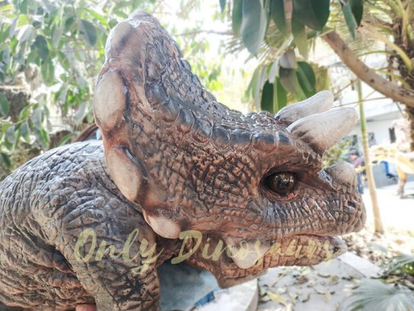 Realistic Triceratops Baby Puppet of Jurassic World Dark Brown4 1
