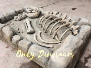 T-Rex Skeleton Dinosaur Fossils Digs for Kids