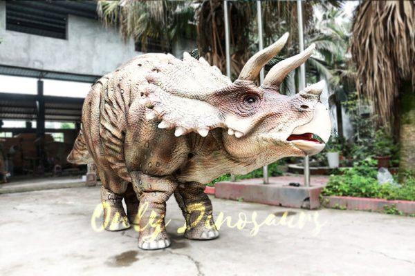 Theme Park Triceratops Dinosaur Suits1 1