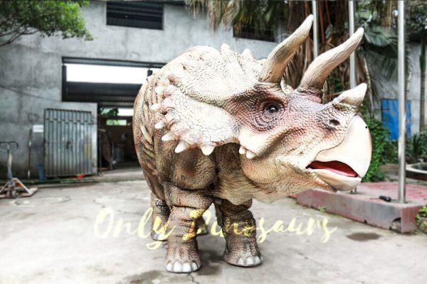 Theme Park Triceratops Dinosaur Suits2 1