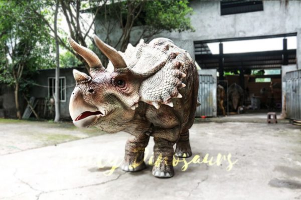 Theme Park Triceratops Dinosaur Suits4 1