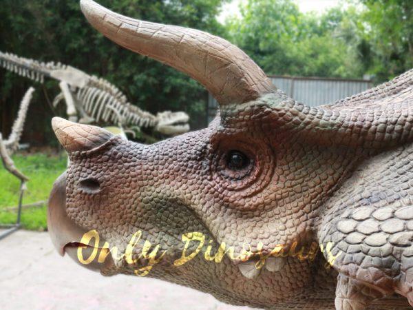 Theme-Park-Triceratops-Dinosaur-Suits6