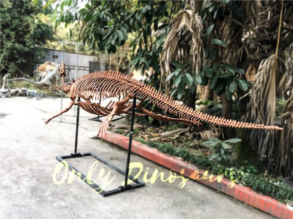 4 Meters Lifelike Complete Plesiosaur Dinosaur Skeleton2