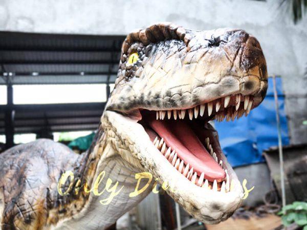 Animatronic Dinosaur Raptor for Dinosaur Park3