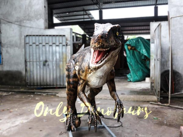 Animatronic Dinosaur Raptor for Dinosaur Park5