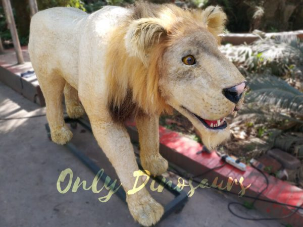 Animatronic-Lion-for-Theme-Park4