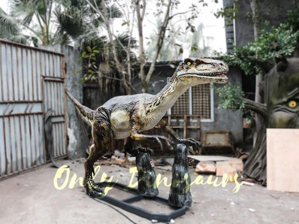 Animatronic Velociraptor with stub for Park1