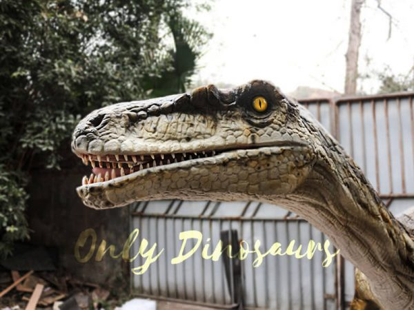 Animatronic Velociraptor with stub for Park4