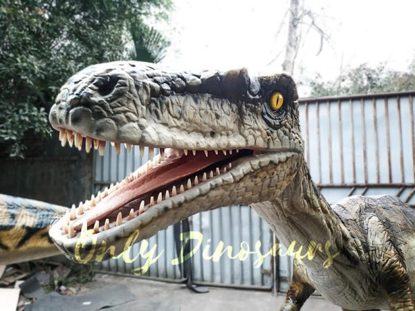 Animatronic Velociraptor with stub for Park5