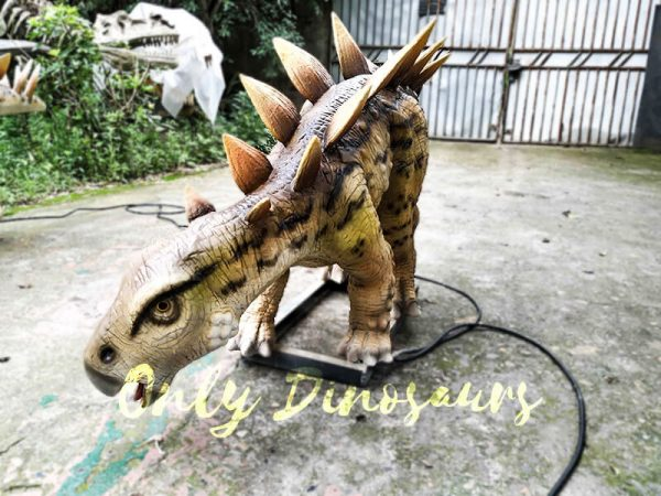 Animatronic Young Stegosaurus Props for Garden4
