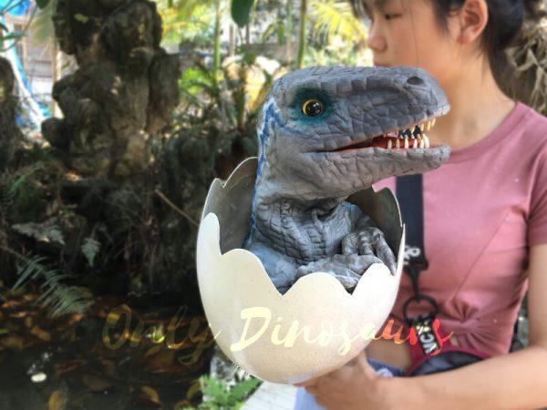 Baby-Blue-Velociraptor-Newborn-in-Eggshell5