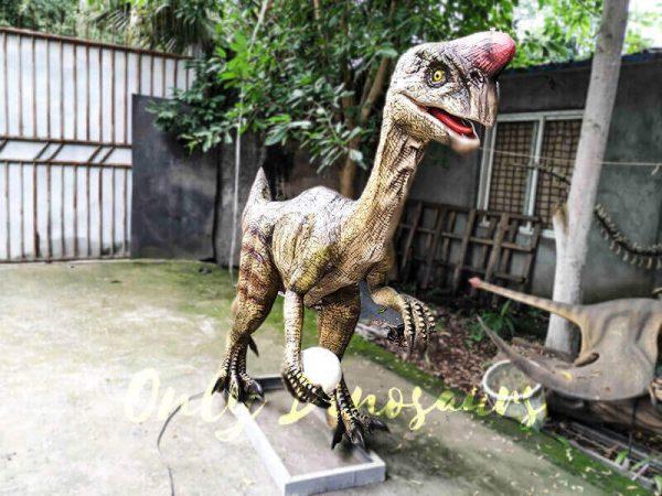 Buy Animatronics Oviraptor for Dinosaur Event2