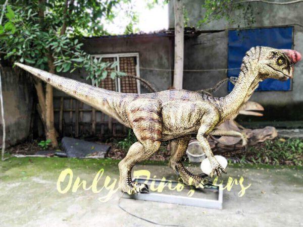 Buy Animatronics Oviraptor for Dinosaur Event3