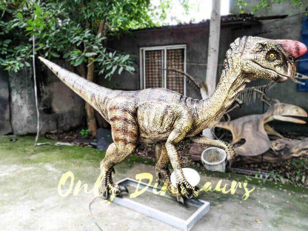 Buy Animatronics Oviraptor for Dinosaur Event4