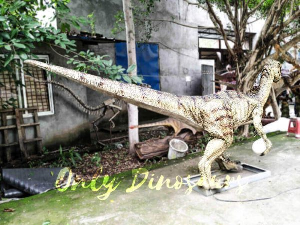 Buy Animatronics Oviraptor for Dinosaur Event5