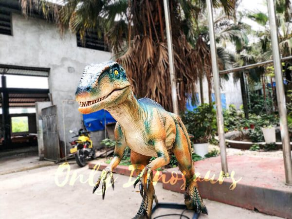 Colorful Animatronic Robot Raptor for sale3