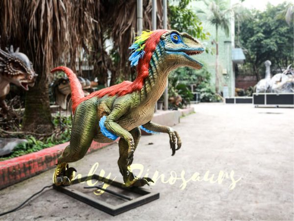 Colorful Feathered Animatronic Raptor for Show5