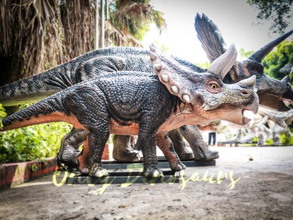 Dinosaur Exhibition Attract Animatronic Triceratops Family4
