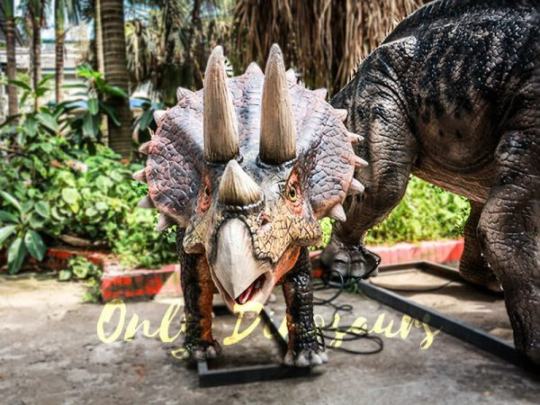 Dinosaur Exhibition Attract Animatronic Triceratops Family6