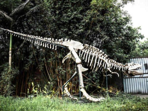 Dionsaur Exhibition Fossil Tyrannosaurus Skeleton1