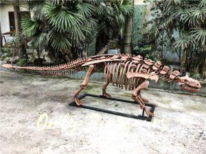 Fossil Ankylosaur Dinosaur Skeleton Models