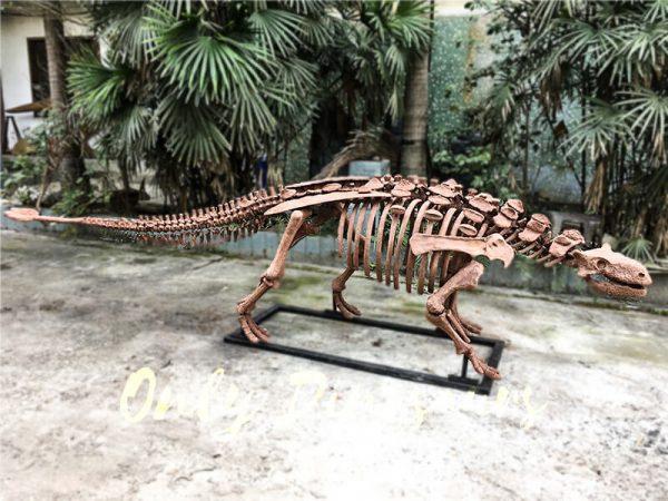 Fossil Ankylosaur Dinosaur Skeleton Models1