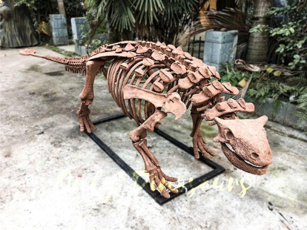 Fossil Ankylosaur Dinosaur Skeleton Models2