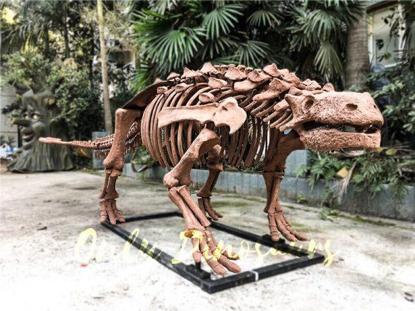 Fossil Ankylosaur Dinosaur Skeleton Models4