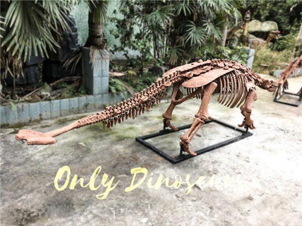 Fossil Ankylosaur Dinosaur Skeleton Models5