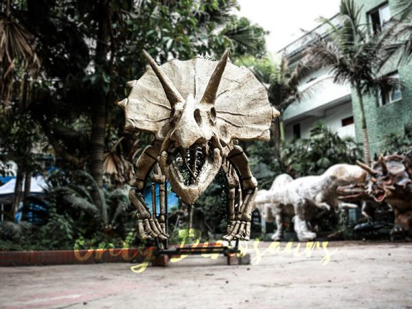Full Size Triceratops Dinosaur Fossils for sale3