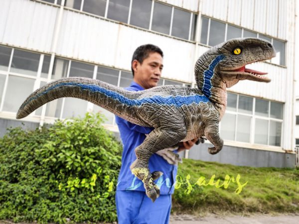 Jurassic Baby Blue Raptor Dinosaur Hand Puppet4