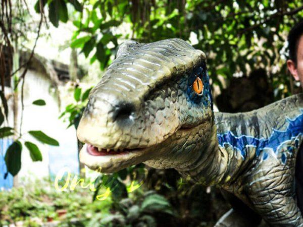 Juvenile Blue Raptor Shoulder Puppet Realistic Dinosaur3