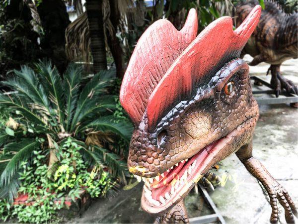 Life size Animatronic Dinosaur Dilophosaurus3
