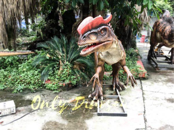 Life size Animatronic Dinosaur Dilophosaurus5