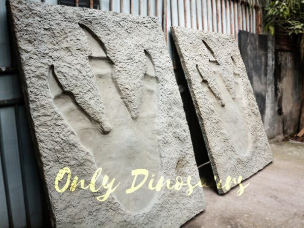 Lifesize Tyrannosaurus Dinosaur Footprint Fossil for sale5