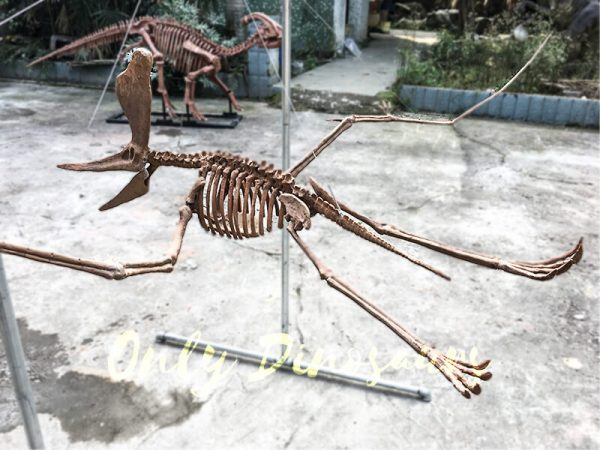 Real Dinosaur Fossils for sale Pterosaur Replica1